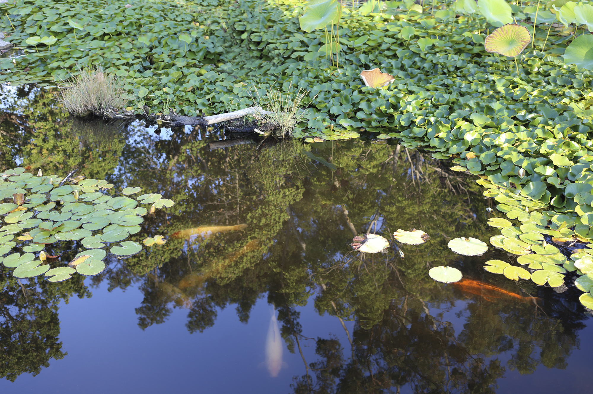 Peacful Pond by Rich J. Velasco